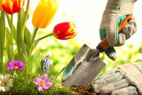 Cursos online de jardinería