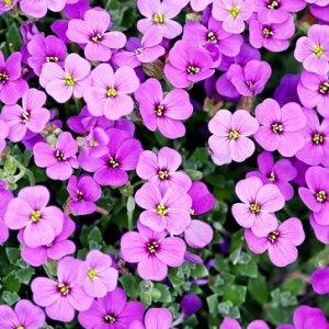 curso-online-tecnico-profesional-en-jardineria-diseno-creacion-y-mantenimiento-de-jardines