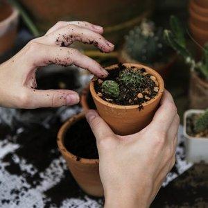 curso-online-operaciones-basicas-para-el-mantenimiento-de-jardines-parques-y-zonas-verdes