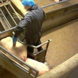 curso-presencial-curso-de-bienestar-en-mataderos